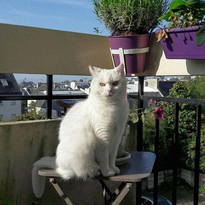 Photo de LADY - Chat Femelle - Arche de Noé Brest